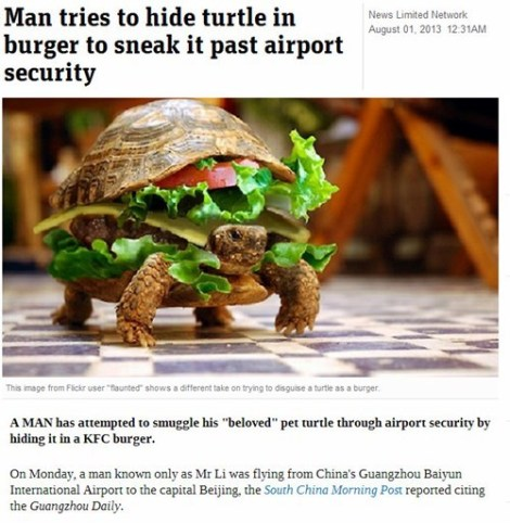 turtle sneaking